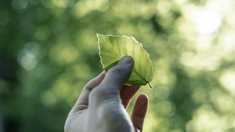 Strenge Überprüfung der Nachhaltigkeits-Kriterien